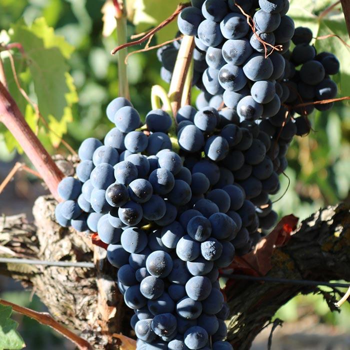 Genuss-Abend »Auf Weintour an der Rhône«