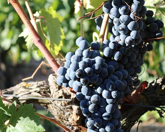 Genuss-Abend »Chapeau Chapoutier! – Eine Weinreise an die Rhône«