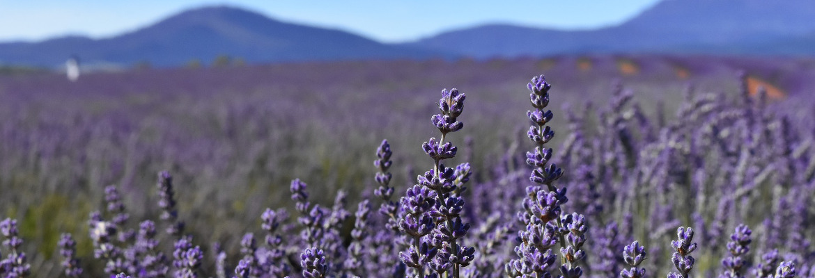 Provence-Ros-_-1170x400