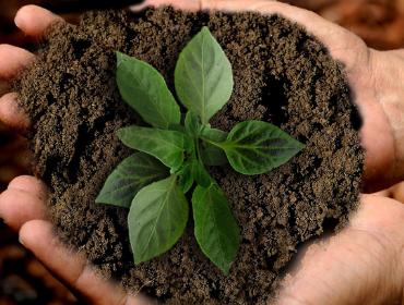 Kleiner Aufwand, große Wirkung: Nachhaltigkeit im Alltag